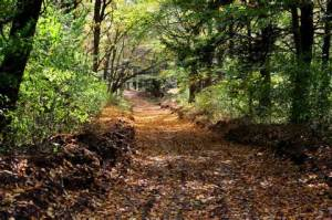 WP Journey path