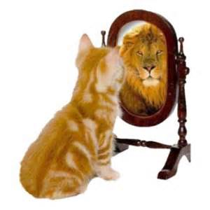 WP cat lion in mirror