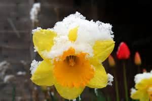 Springtime Snow?